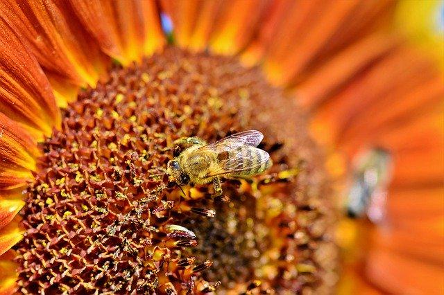 бджілка трудівниця ресурс праця робота продуктивність невтомний труд