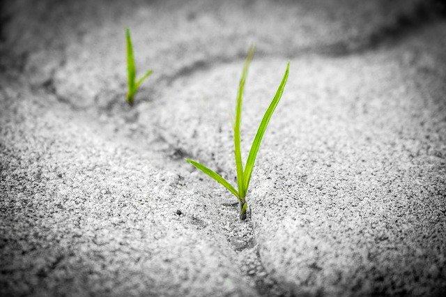 мотивація ріст розвиток паросток зусилля