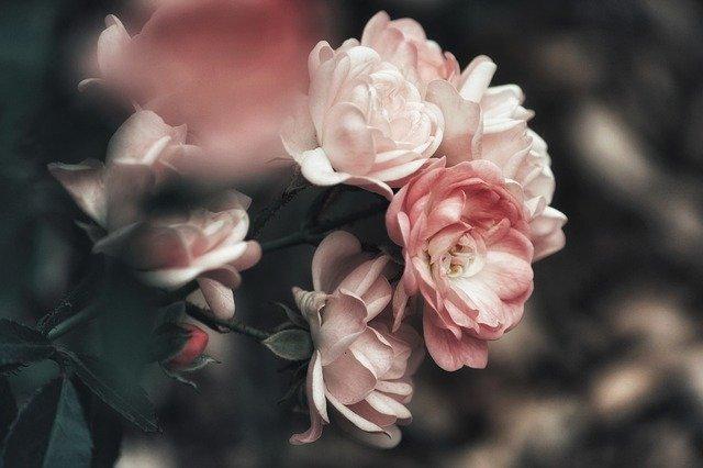 ніжність троянди кохання взаємодія довіра