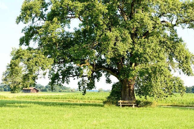 дерево природа ресурси позитив