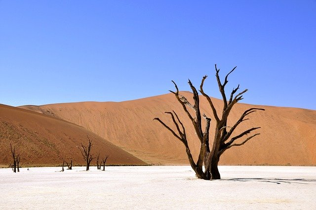 дерево сухе пустеля
